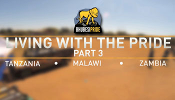 Living With The Pride - Part 3 - Tanzania, Malawi, Zambia